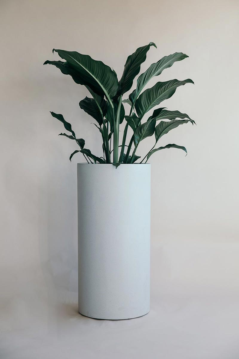 Bianca Tall Cigar Planter Pot with leafy plant from The Green Room