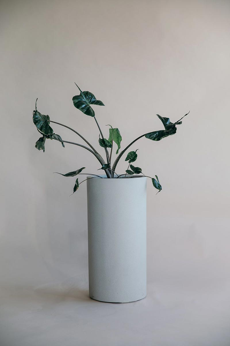 Bianca Tall Cigar Planter Pot with plant from The Green Room