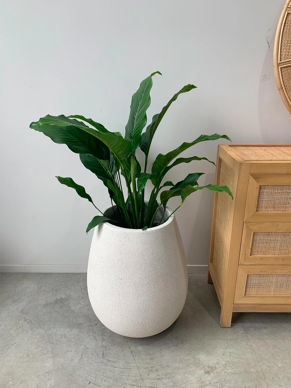 Whitestone Sagger Planter pot from The Green Room