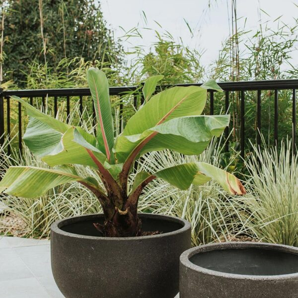 Aspiring Planter Bowls in black outside with leafy plants available from The Green Room