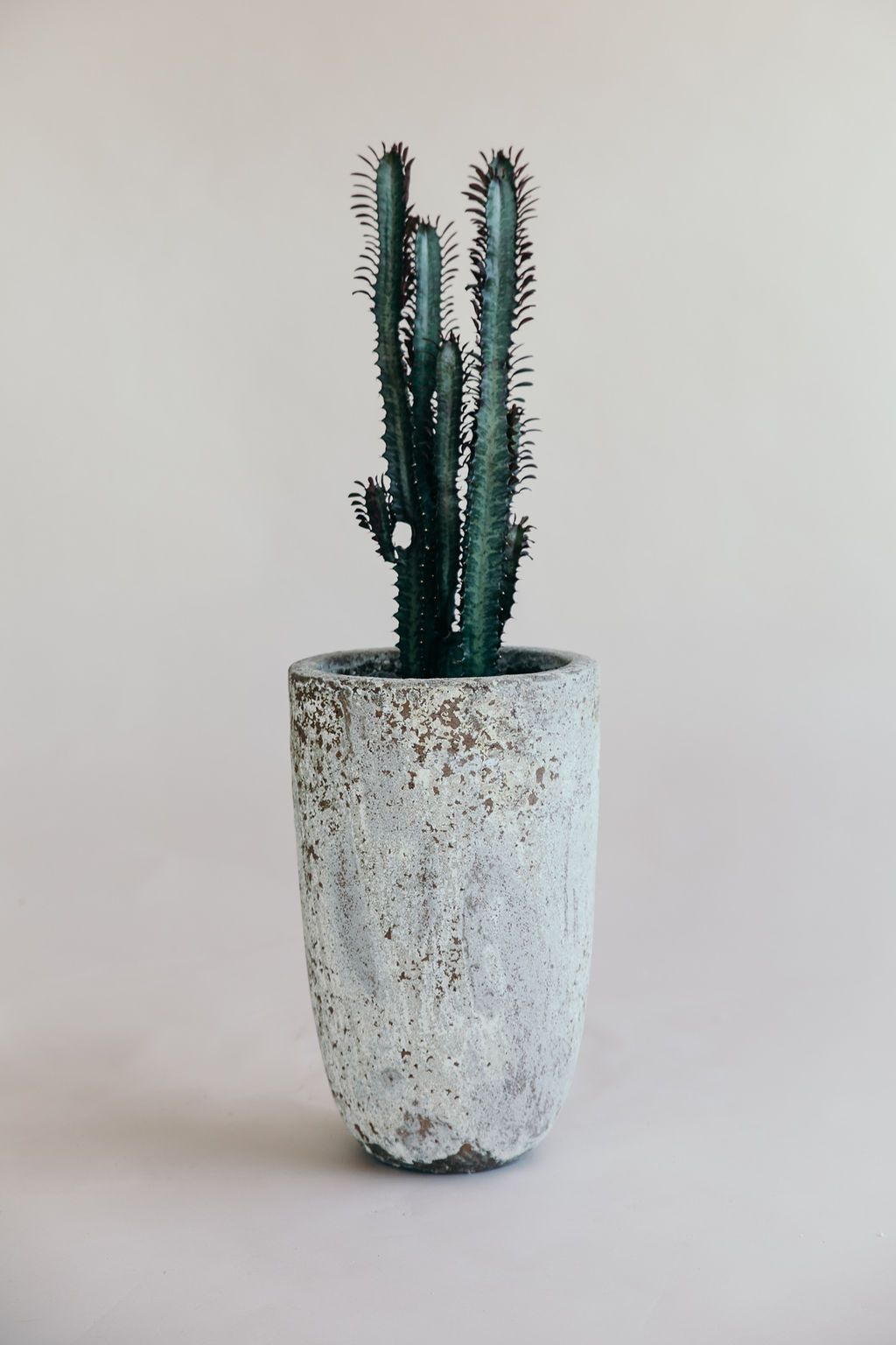 Small Atlantis U Planter in grey colour with planted cacti from THe Green Room