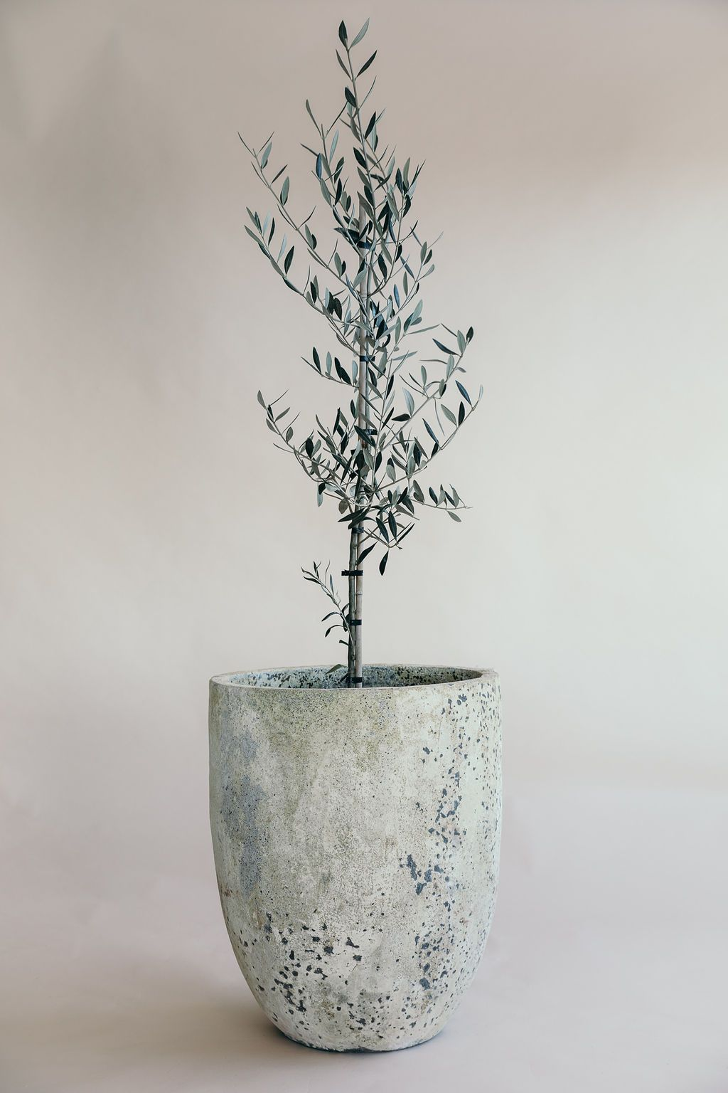 Small Atlantis U Planter in grey colour from THe Green Room