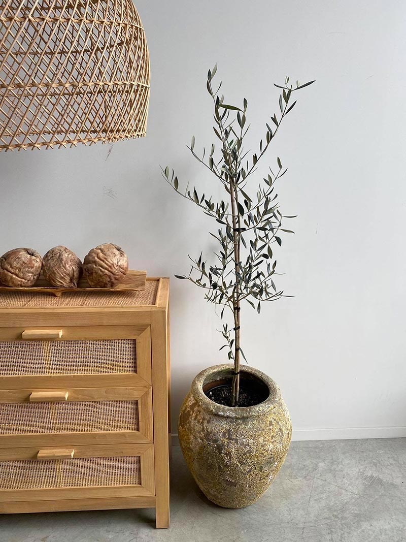 Atlantis Water Jar Medium Pot with Plant set indoors by The Green Room