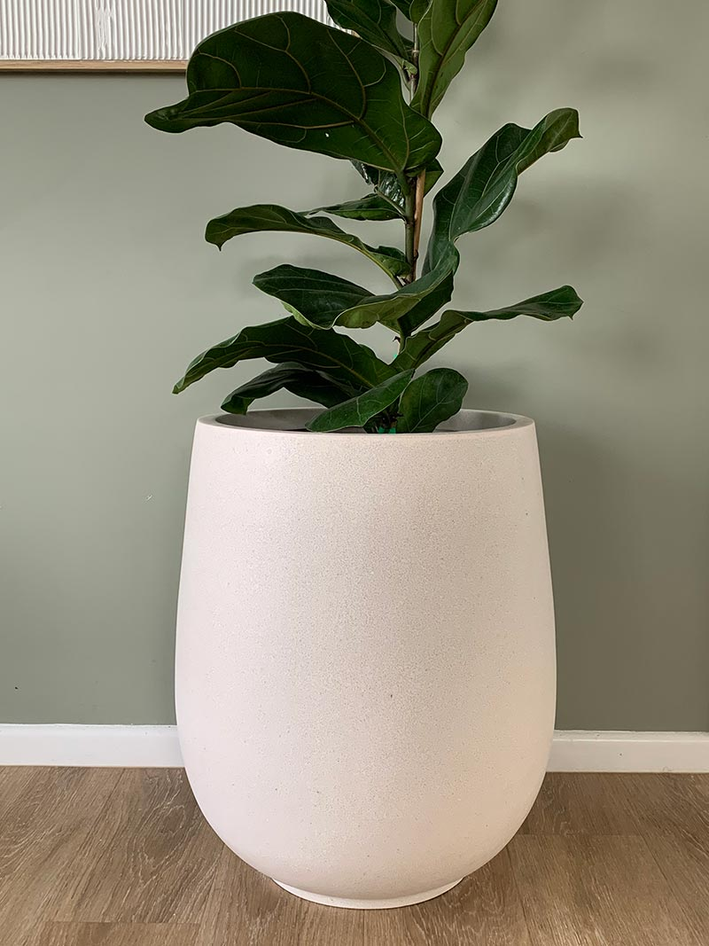 Bianca Palm Pot in light colour with leafy plant available from The Green Room
