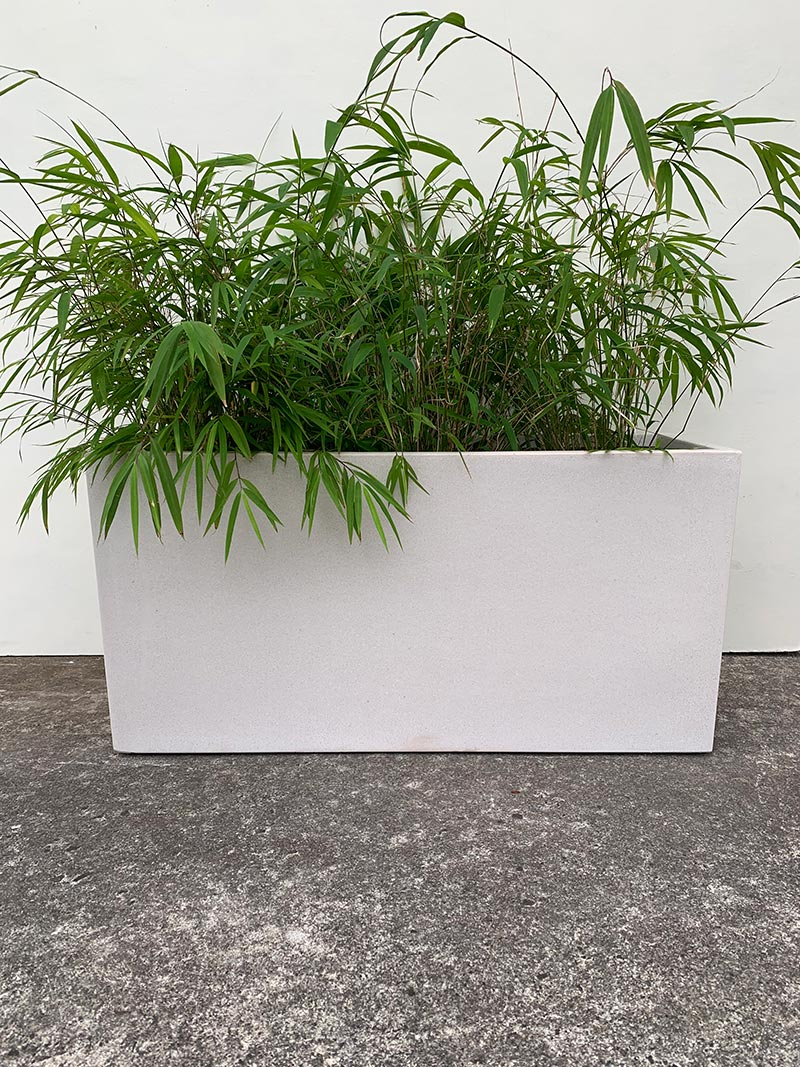 Bianca Planter Trough with leafy plant available from The Green Room