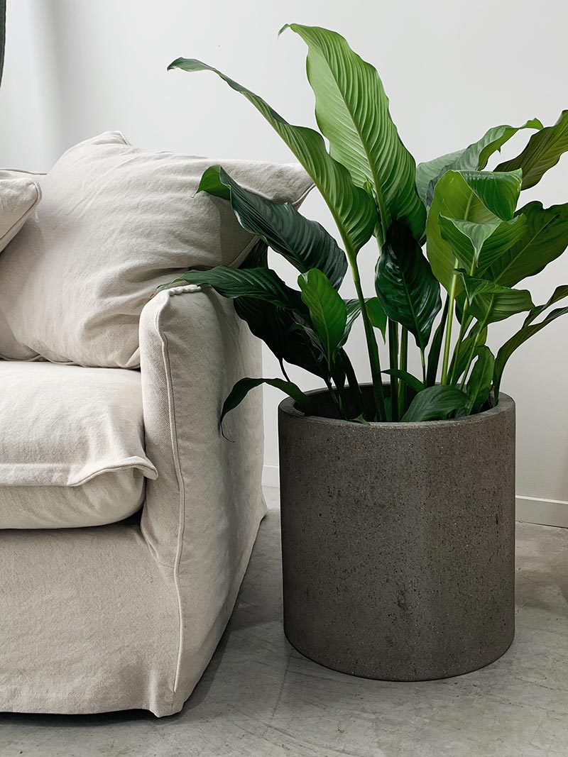 Large sized Riverstone Cylinder Planter in Grey with planted cacti from The Green Room