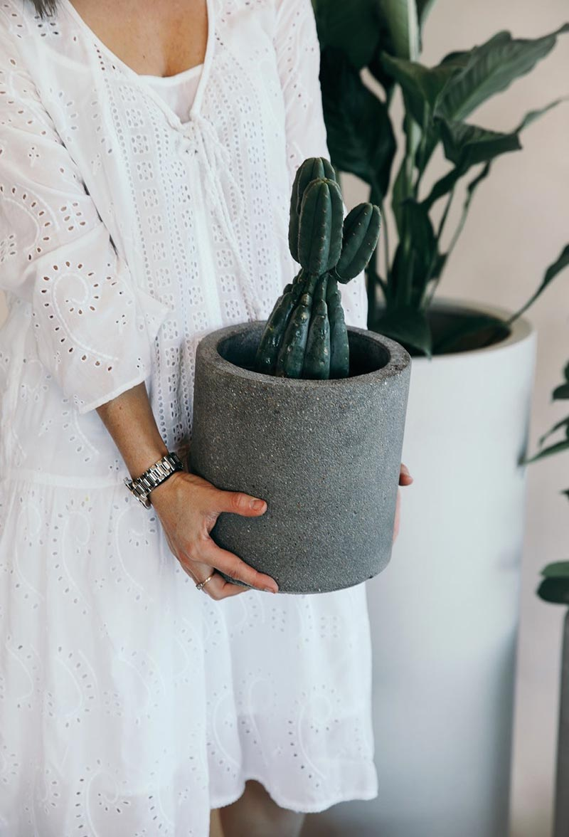 Riverstone Cylinder Planter in Grey with planted cacti from The Green Room