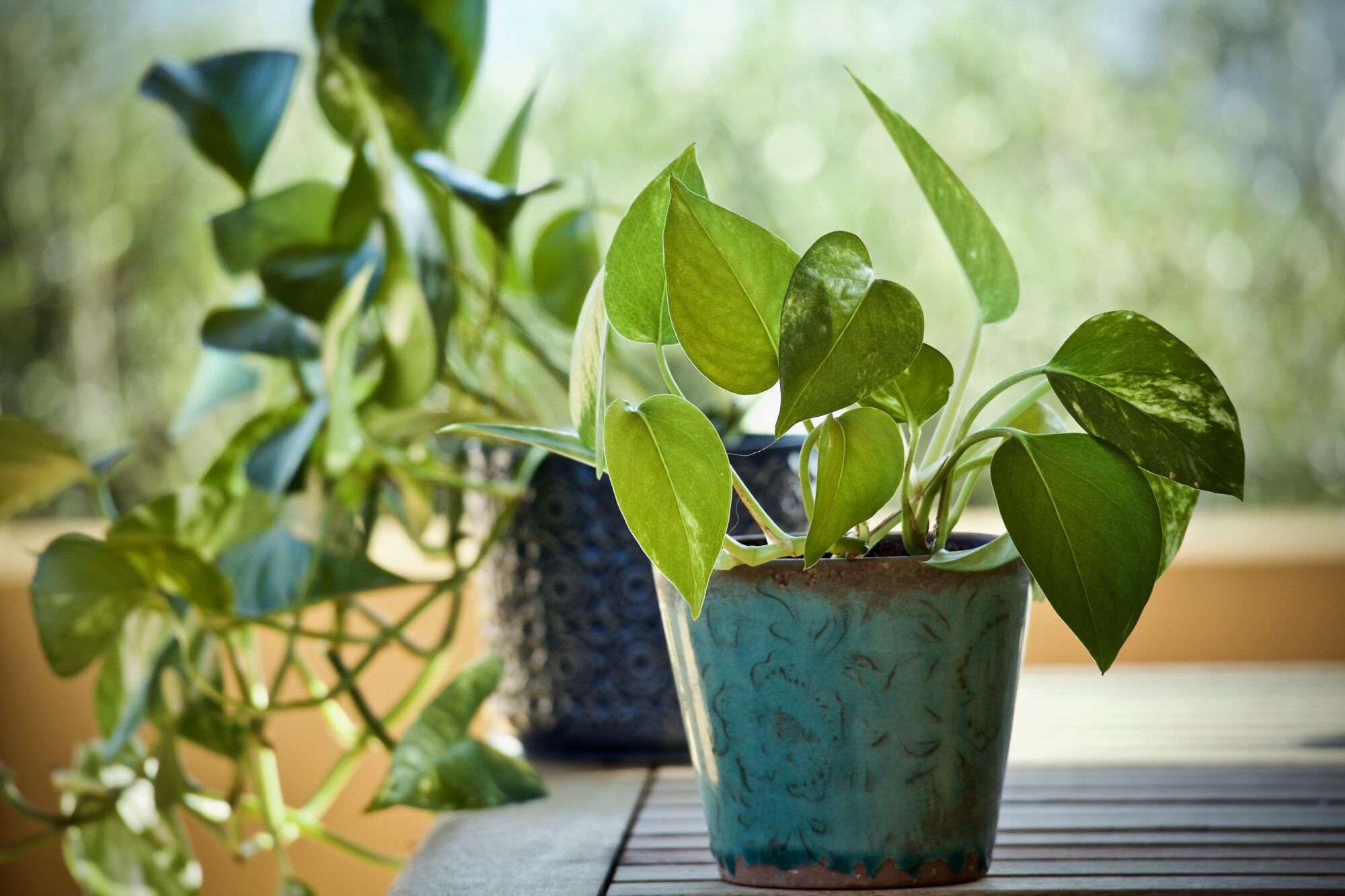 Indoor potted plant - how to deal with indoor plant pests